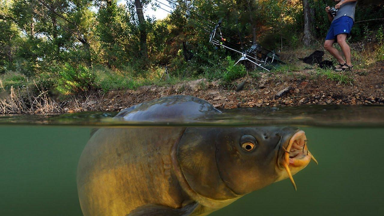 Научим правильно ловить рыбу