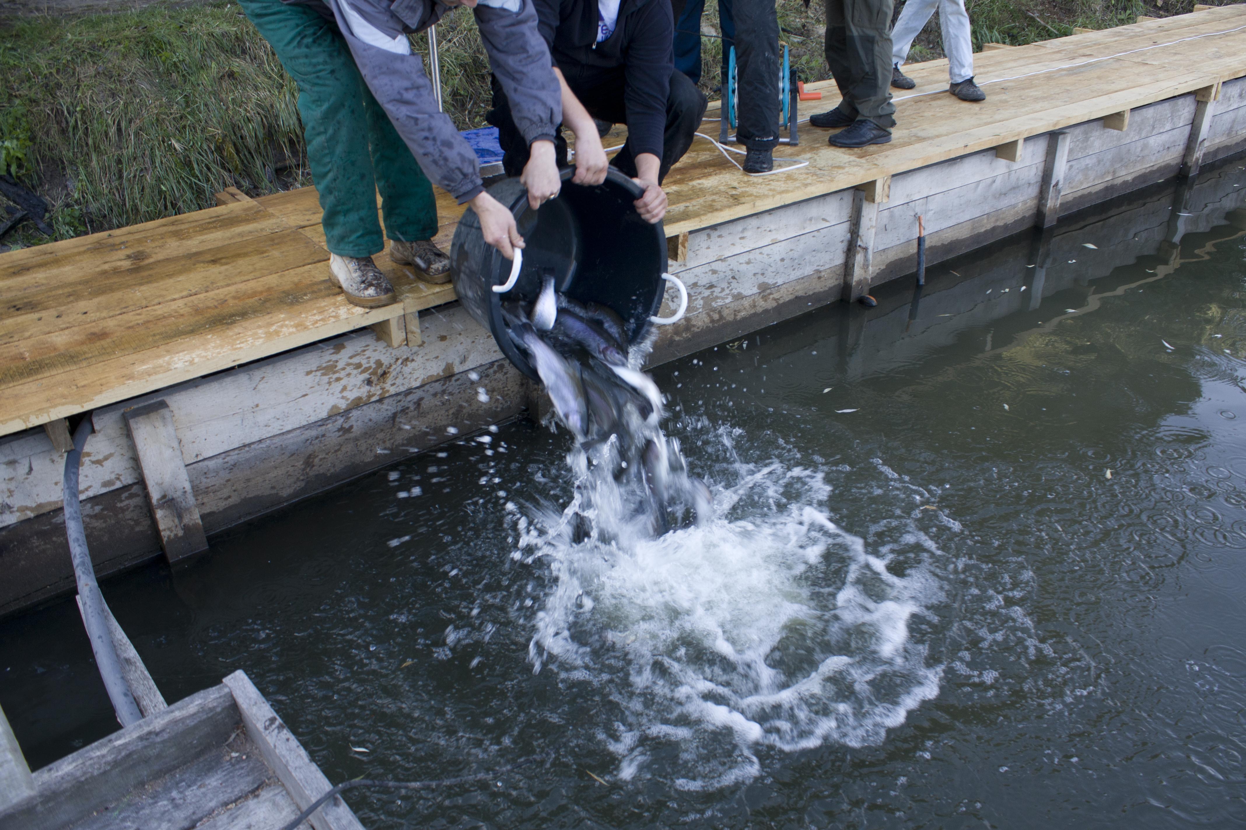 Рыбалка на форель Киев